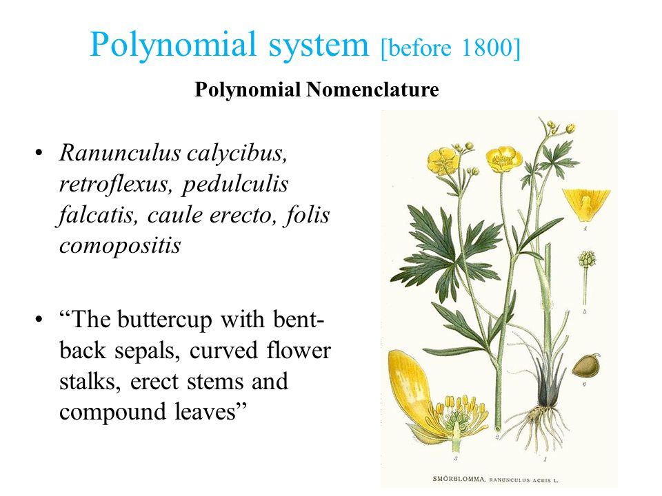 Polynomial system [before 1800]